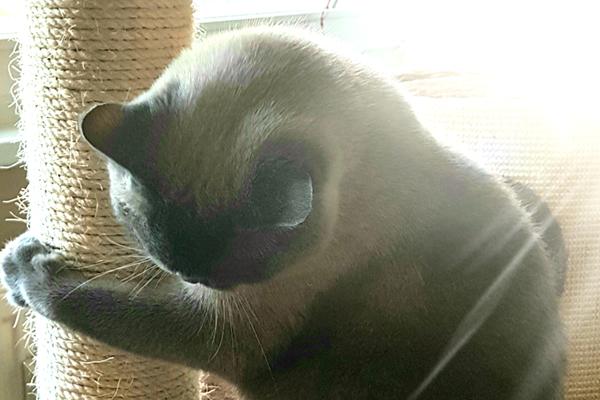 Die Katze lässt das kratzen nicht - oder wie viel Spuren darf eine Katze in der Wohnung hinterlassen?
