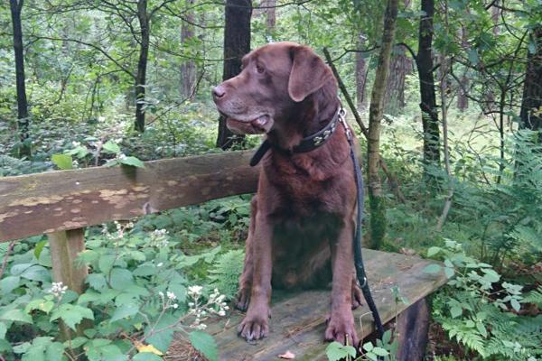 Der an der Leine geführte Hund  oder die (vielleicht nicht ganz ernst gemeinte) Frage: Wozu ist die Steuermarke dar?