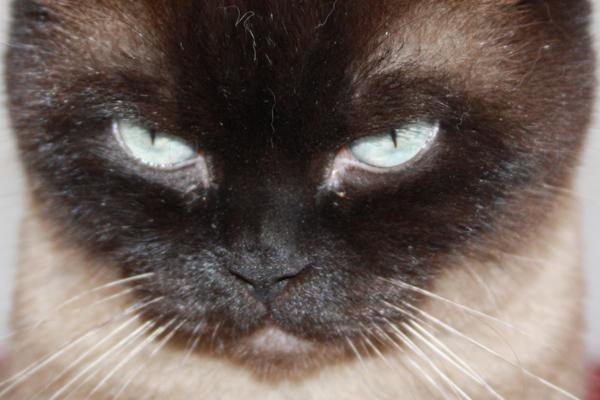 Die Katze auf dem Autodach - oder wie kann die Katze überführt werden?